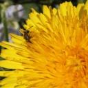 Alergie a odstranění příznaků přírodními prostředky