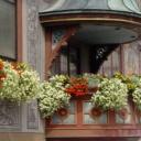 Balkon plný květin nemusí být jen sen