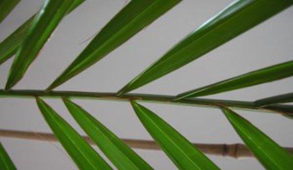 Bambus v zahradě