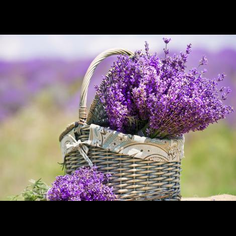 bydlení, vůně, aroma difuzér