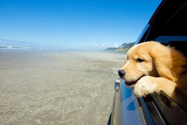 přepravní box pro psy, taška na psa, cestování se psem dopravními prostředky