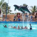 Plavání s delfíny v Dubaji – vodní park Atlantis