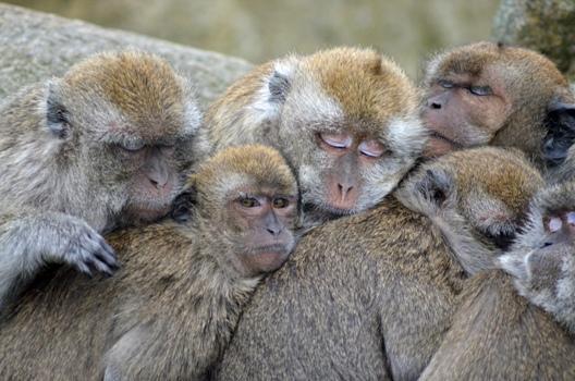 Zoo v Thajsku