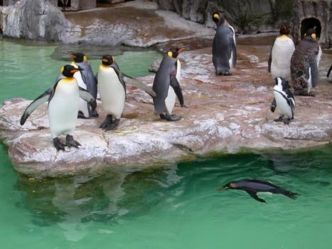 Zoo v Tokiu - Japonsko