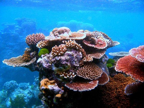 Největší oceánská pokladnice světa