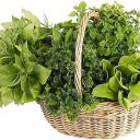Jak na pěstování bylinek v zahradě i na okně?