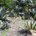 Jak pěstovat kaktusy v zahradě?