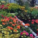 Podoby zimních zahrad