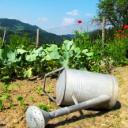 Zelenina potřebuje dostatek vláhy - jak zalévat efektivně?