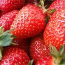 Jahody chrání mozek?