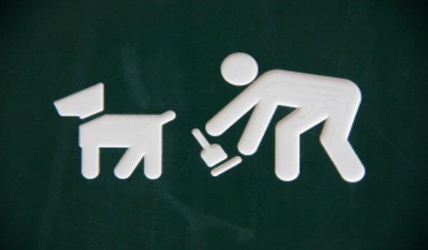 děti, psi, bezpečí a zdraví dětí