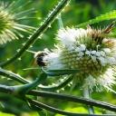 Detoxikace jater pomocí bylinek, citronu nebo zelených potravin