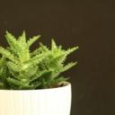 Detoxikace organismu s aloe vera