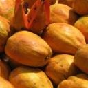 Detoxikace pomocí papáji - stromového melounu