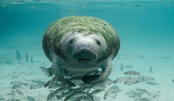 dovolená, kapustňáci, moře, delfíni, mořští živočichové