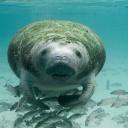 Dovolená pro milovníky zvířat, žijích v moři