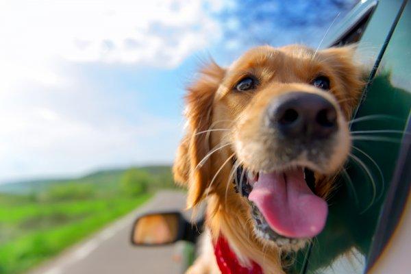 dovolená, dovolená v České republice, psi, dovolená s mazlíčky, chaty, chalupy, penziony