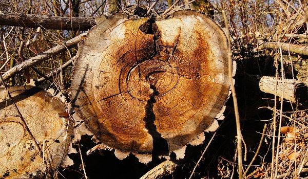 dřevostavba, dřevodomek, dřevo, bezpečnost, škůdci, stavba domu