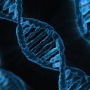 Hubnutí, které je řízeno genovou anylýzou