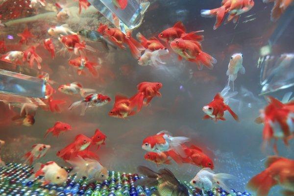 rybičky, akvárium, dovolená