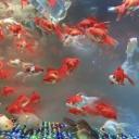 Jak krmit rybičky v akváriu, když odjedeme na dovolenou?