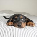 Jak odnaučit spát psa ve vaší posteli
