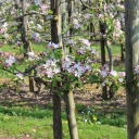 Jak správně zasadit ovocné stromy, aby nestrádaly?