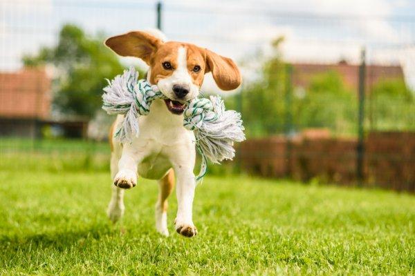 hračky pro psy, zvířata, psi, zábava pro psy