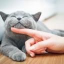 Kočka je věrná společnice pro každého páníčka