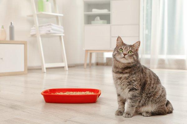 kočka, kočkolit, stres u kočky, chovatelské potřeby