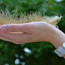 Krásné a pěstěné nehty vám zajistí kokosový olej