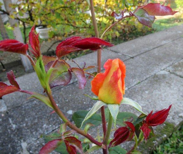 bydlení, zahrada, jedovaté rostliny, děti