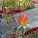 Krásné zahrady mohou být nebezpečné pro malé děti - pozor na to, co pěstujete!