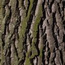 Kůra stromů léčí, jen je třeba ji správně odebrat, usušit a připravit