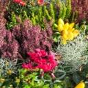 Květinové koberce na zahradách