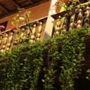 Květiny na balkónové zahradě - 1.část
