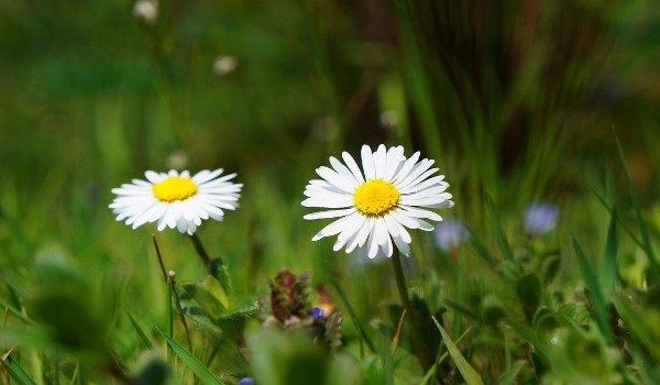 stolování, květiny, jedné květiny, zdravá výživa