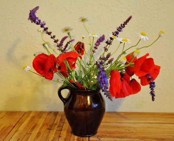 květiny, luční květiny, bydlení