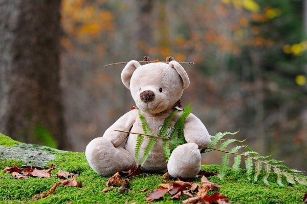 lesní mateřská škola, děti, výchova dětí,. zdraví dětí, les