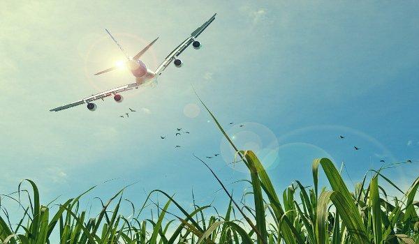 letadlo, děti, dovolená, těhotné ženy, cestování