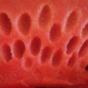 Letní detoxikace ledvin - melounová kúra