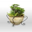 Levná pračka vzduchu - zelené rostliny v bytě
