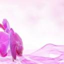 Masáž, která dokáže prodloužit život, léčit a odstranit stres