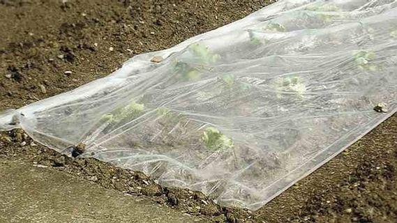 netkaná textilie, zahrada, zahrádkář, zelenina