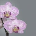 Orchideje - exotická krása