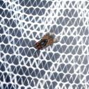 Otravuje vás v létě hmyz?