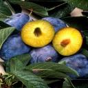 Ovoce a zelenina - druhy, které oddalují stárnutí a civilizační choroby
