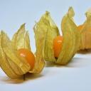 Ovoce se záhadným názvem a mimořádným obsahem vitaminů - Physalis peruviana