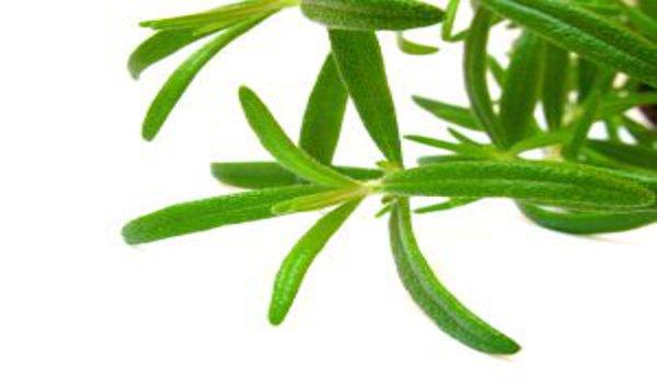 detoxikace ledvin, bylinky, koupele, životospráva
