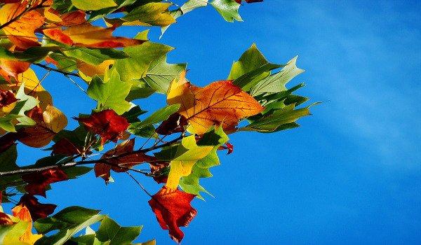 podzim, turistika, výlety s dětmi do přírody, příroda, papírový drak